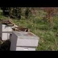 Le mystère de la disparition des Abeilles – Documentaire (août 2012)