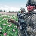 Les boys d'Obama et la culture du pavot font bon ménage en afghanistan