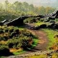 La légendaire forêt de Merlin l'Enchanteur choisie pour accueillir une gigantesque décharge..