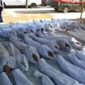 Les victimes de Ghouta ne sont sans doute pas celles du gouvernement syrien