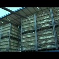 Adieu veau, vache, cochon, couvée : histoire de l'élevage intensif – Documentaire de Béatrice Limare (2012)