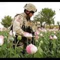 D'opium Brut : l'Implication des USA dans l'explosion du trafic d'héroine – Documentaire (2013)