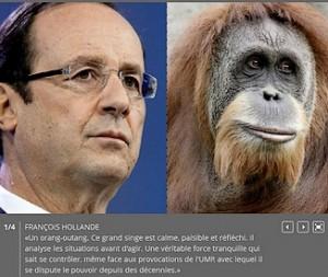 hollande l'orang-outan (déjà !)