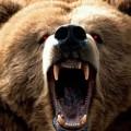 A force de se faire tirer les poils des pattes, l'ours russe est en train de se réveiller..