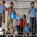 Des enfants palestiniens en cage pour jets de pierre... la justice coloniale israélienne dans ses oeuvres