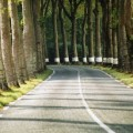 Une route française bordée de platanes... le voyage cuachemardesque de madame Perrichon !