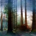 Ouverture n° 3 en ré majeur 1068 BWV 1068 de J.S. Bach – 2ème mouvement «Air»