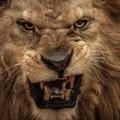 Le Roi des animaux, malades de la peste, est en colère... on le serait à moins